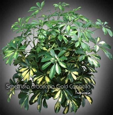 plante d int 233 rieur