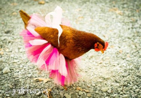 fashion fowl awesome fashion finds   pet chickens