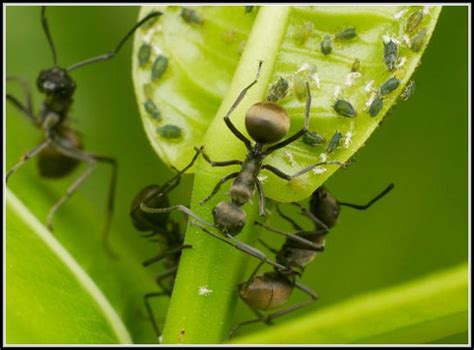 hausmittel gegen ameisen im garten 4356 hausmittel gegen ameisen im garten garten house und