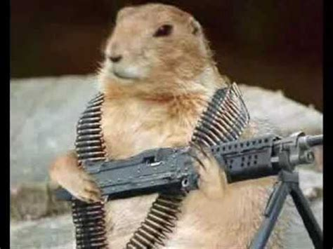 Warning: Squirrels with guns   YouTube
