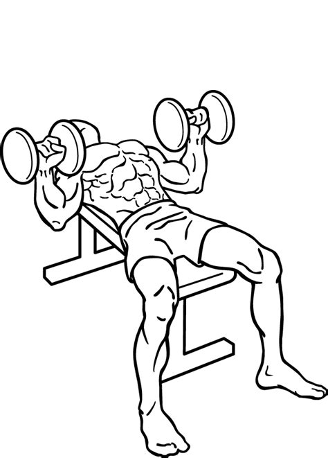 dumbbell alternating bench press dumbbell bench press bicep workouts