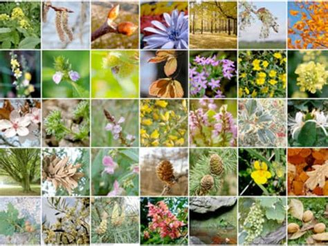 i 38 fiori di bach cosa sono i fiori di bach e come agiscono nel nostro corpo