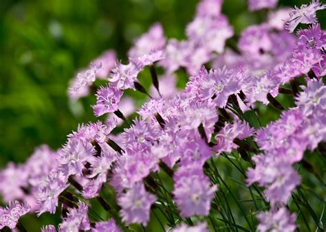 Small Purple by Small Purple Flowers By Edward Myers