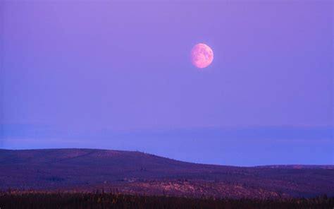 full strawberry moon when to see the strawberry moon and where it got its