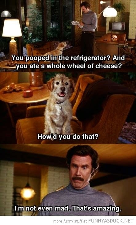 will ferrell movie quotes will ferrell movie quotes www pixshark images
