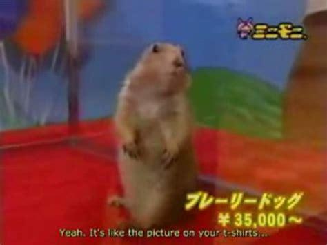 Dramatic Squirrel Meme - dramatic squirrel meme www pixshark com images