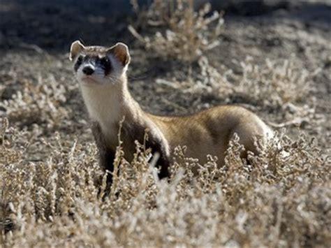 animals temperate grasslands