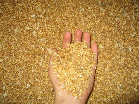 di commercio catania prezzo grano duro di commercio il mercato grano duro stabile