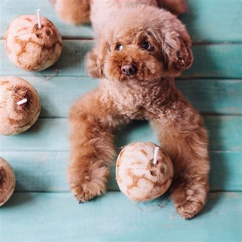 benefits of coconut for dogs brains benefits of coconut for dogs the digest