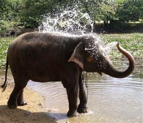 gc23p0w elefanten dusche (traditional cache) in