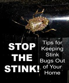 how to keep stink bugs out of your house 1000 images about occasional invaders on pinterest periodical cicadas millipedes and multimedia