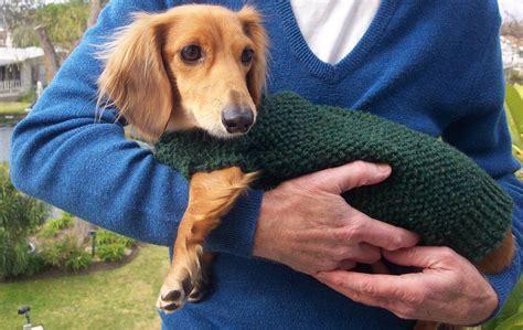pattern for dachshund dog coat buy lena s cozy brioche miniature dachshund dog sweater