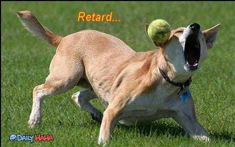 retarded dogs retarded