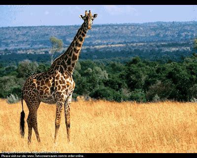 animals planet: wild animals