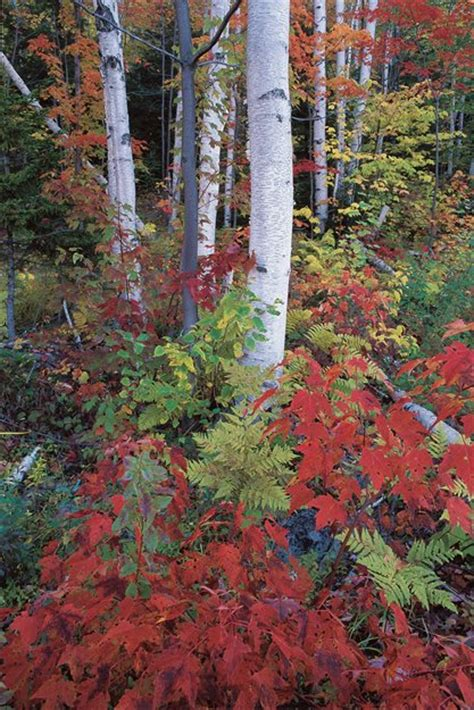 colorful trees top trees for colorful fall foliage garden design