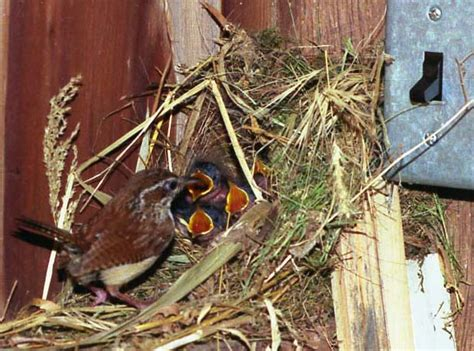 2010 nesting update