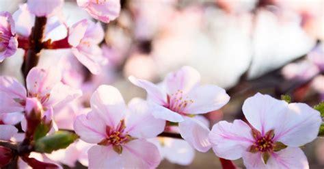 fiori di bach mal di testa i fiori fermano il mal di testa riza it