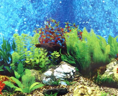 Aquarium Backgrounds To Print Free Printable Background For 10 Gallon Fish Tank Backgrounds For Fish Tanks Printable Free