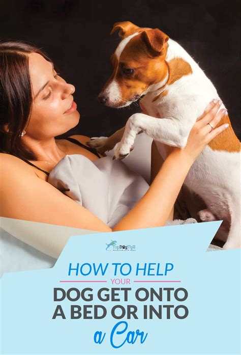 how to get a dog to use a dog house how to help a dog get onto a bed or in a car and manage heights top dog tips