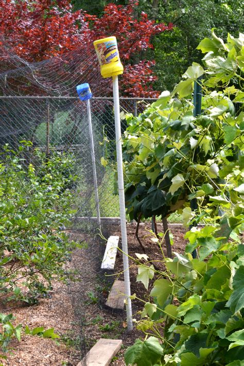 Keep Birds Out Of Your Berries Six More Tips For Growing Gardening Netting For Vegetables