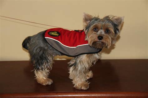 yorkie puppy coat kleidung f 252 r hunde hundemantel hundejacke hundeausr 252 stung 163 29 50