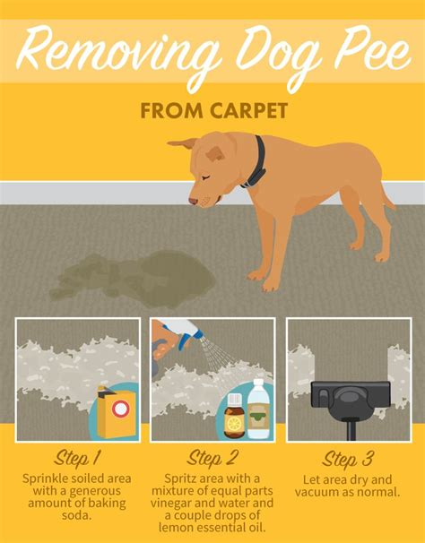 remove urine smell from rug 17 best ideas about pet care on care pet care tips and puppy care