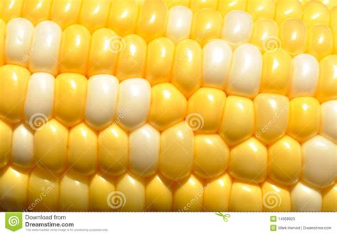 colors of corn bi color corn on the cob stock photos image 14958923