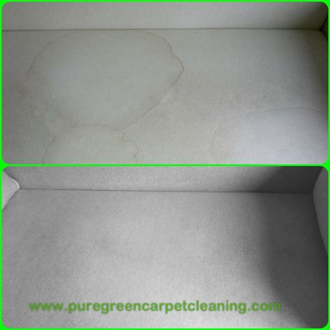 remove urine smell from couch cushions puregreen carpet cleaning upholstery cleaning nyc urine