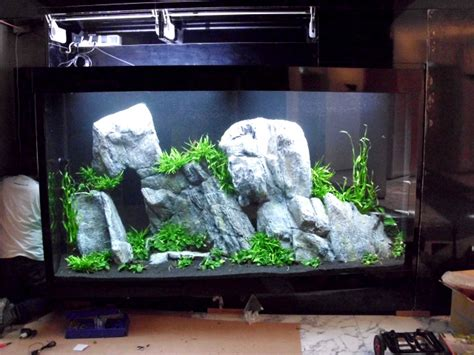 Oliver Knott Aquascaping by 2000 Liter Aquascape By Oliver Knott Photo Oliver Knott The Aqua Creator Photos At Pbase