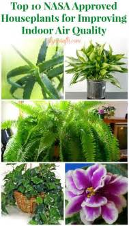 best plants for apartment air quality top 10 nasa approved houseplants for improving indoor air quality top diy ideas