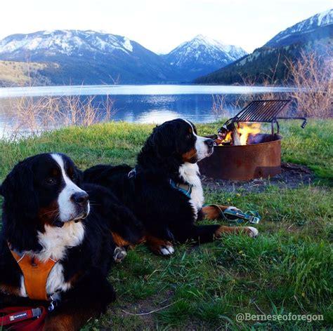 bernese mountain oregon 3242 best get outside community board images on