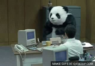 never say no to panda gifs find & share on giphy