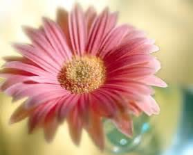 Hd Images Of Flowers Flowers For Flower Lovers Flowers Wallpapers Hd Desktop