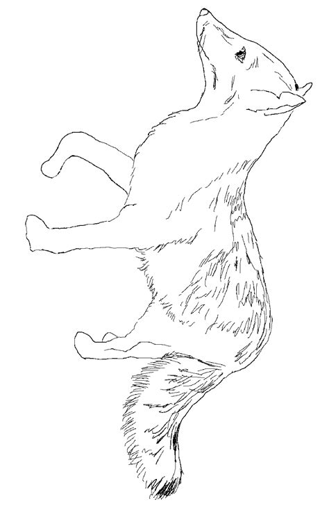 coloring page gray fox fox coloring pages hot girls wallpaper