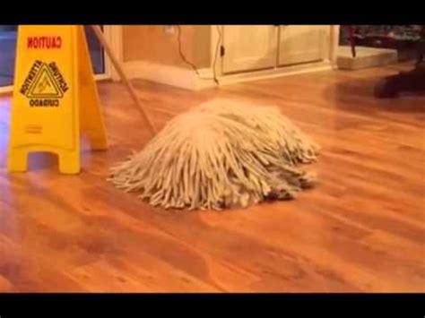 dogs that look like mops a that looks like a mop