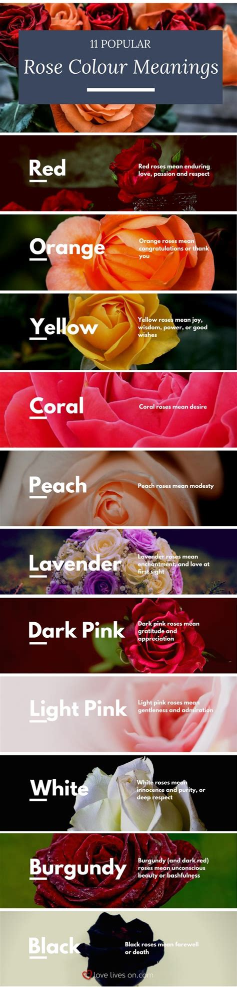 color of roses meaning best 25 color meanings ideas on flower
