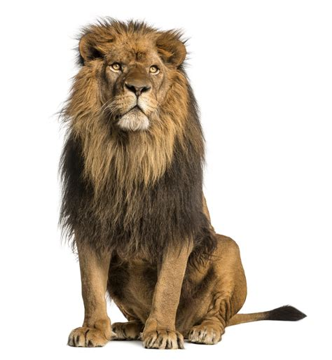 Home Study Design Tips by Stress 10 Strategies For The Lion At Your Door Tls Learning