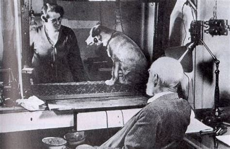 pavlov experiment black friday a pavlovian mental disorder now medicated by cyber monday