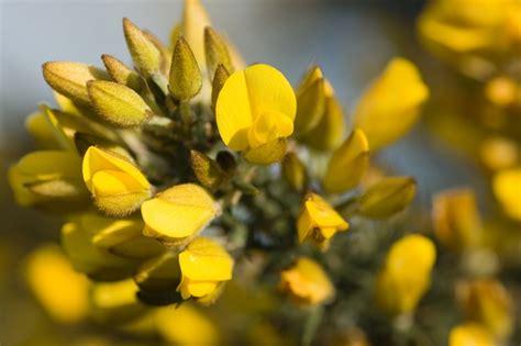 fiori portafortuna 6 fiori portafortuna per capodanno foto pollicegreen