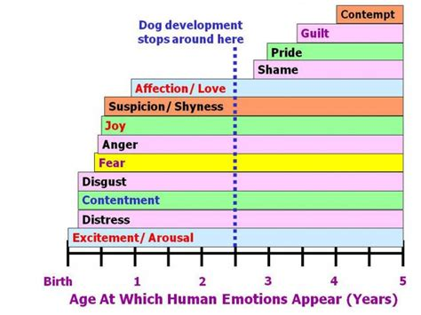 puppy fear stage which emotions do dogs actually experience psychology today