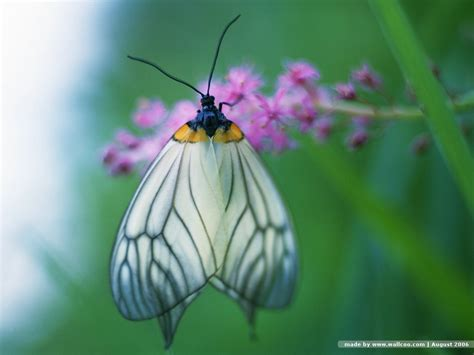 Funny Animated Butterfly Wallpaper Funny Animal Images Of Animated Butterflies
