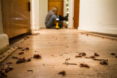 Floor Staple Remover by 100 Hardwood Floor Staple Remover Tool Floor Staple