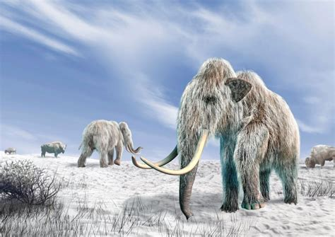 wooly mammoth ice age ice age animals could be brought back to life as dad and