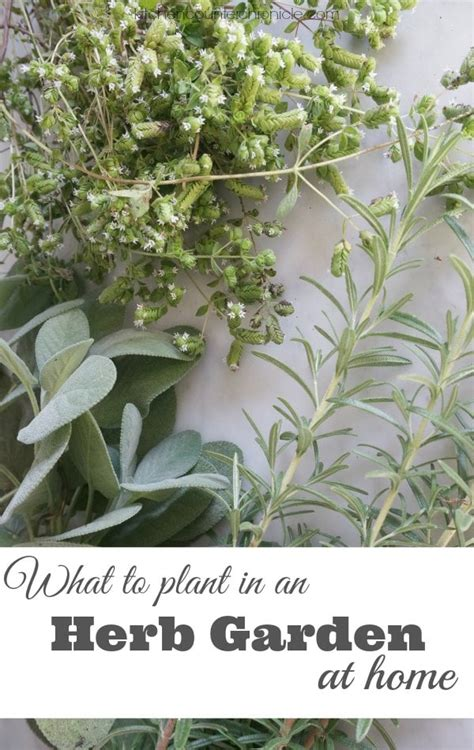 home herb garden what to plant in an herb garden at home