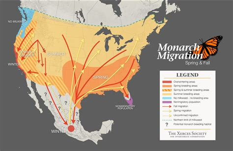 migration map monarch butterfly migration journey citizen science project tracking and fall