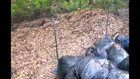 composting oak leaves - Composting Oak Leaves