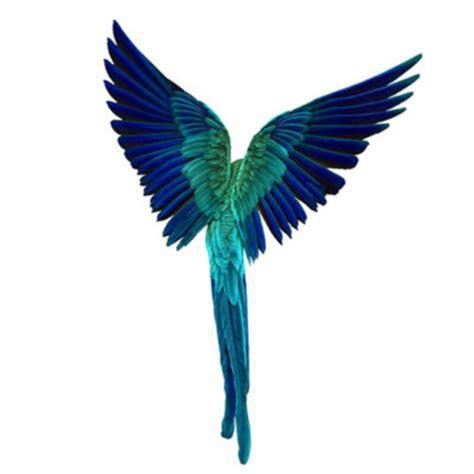 beautiful birds blue feather feathers image 169125