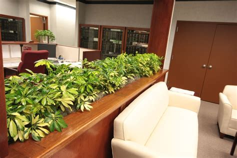 indoor plant design envirogreenery interior plants office plants for