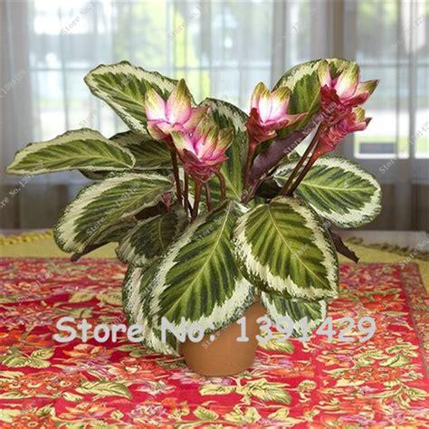 very low light plants popular growing pot indoors buy cheap growing pot indoors