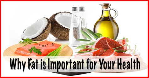 healthy fats important is archives oxford performance centre